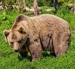Seelentier Bär